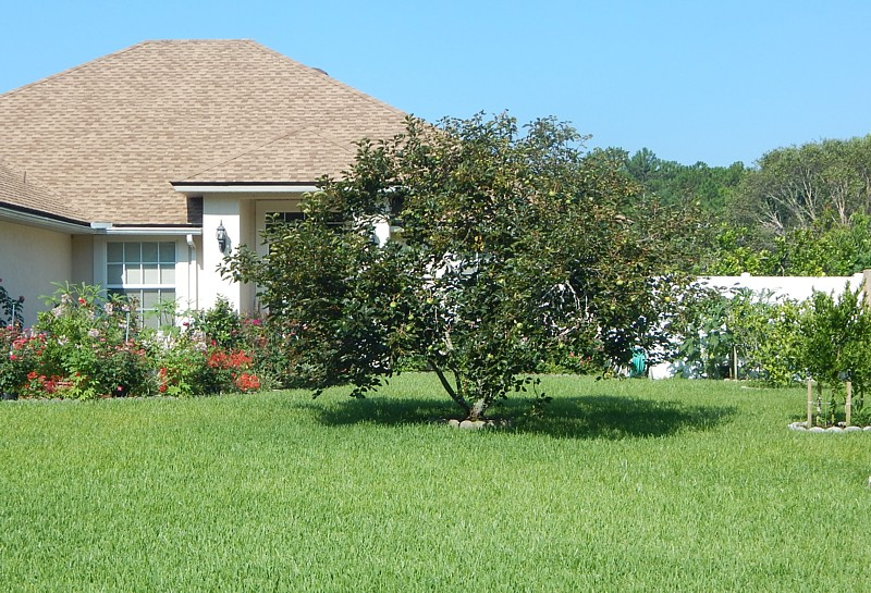 Yulee Lawn Pest Control - Integrity Lawn Pest Control